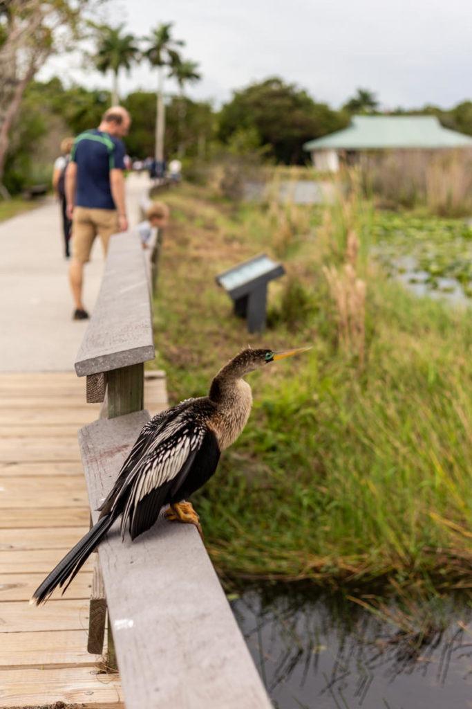 National Parc des Everglades Oiseau
