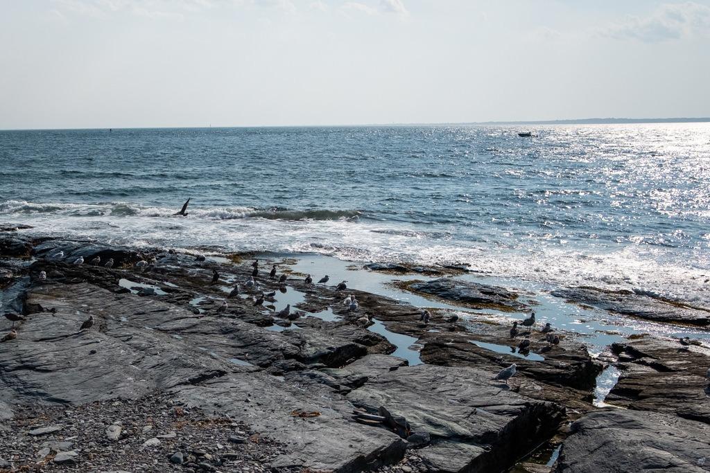 Newport Ocean Plage