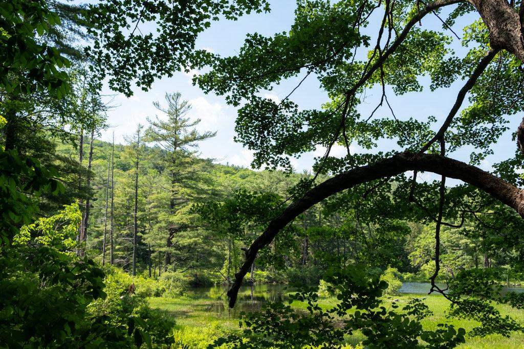 Mass Audubon's Pleasant Valley Wildlife Sanctuary